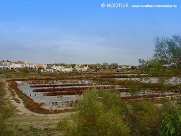 marais-salants-de-noirmoutier-2