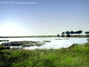 polders-noirmoutier-2